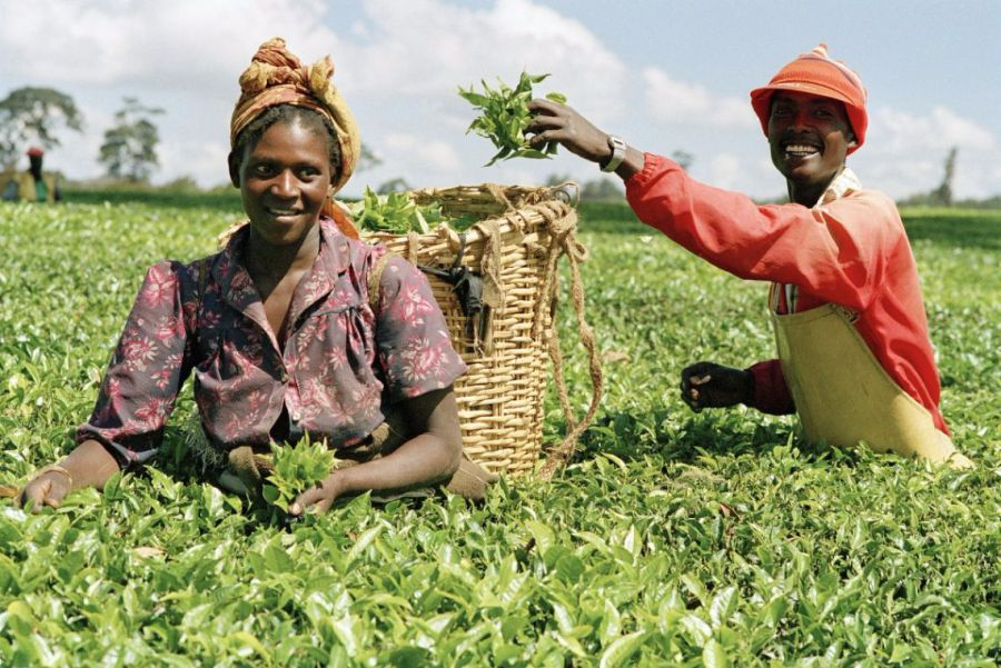 FG to employ 75,000 agric workers